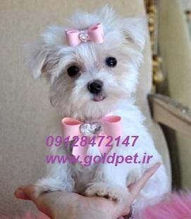 فروش سگ عروسکی