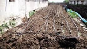 راه اندازی کارگاه تولید کود ورمی کمپوست و پرورش کرم خاکی