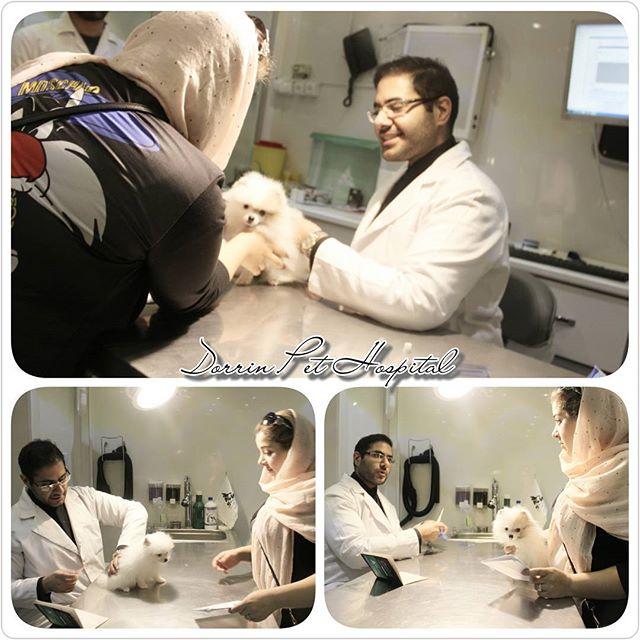 بستری و نگهداری از حیوانات بیمار ، بیمارستان دامپزشکی درین