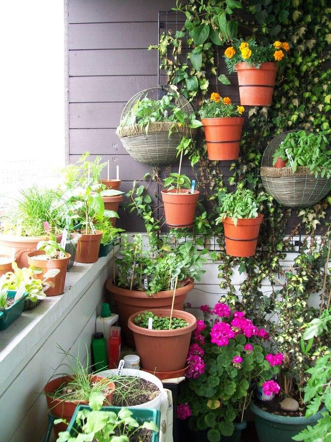 دوره آموزشی پرورش گیاهان آپارتمانی