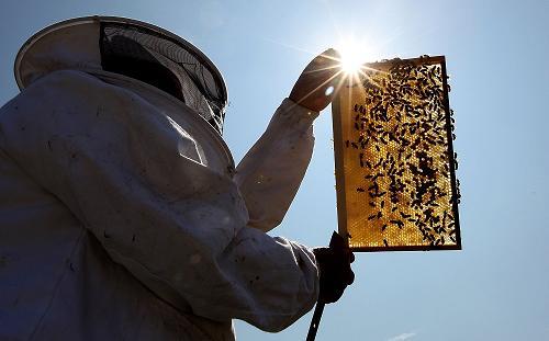 مشاوره حرفه ایی : فقط زنبورداری
