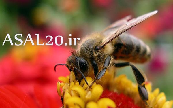 عسلهای کوهی و درمانی کوهستان با 100% تضمین کیفیت