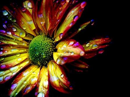 تامين گل وگياه ، درخت ، نشا ، بذر و پياز