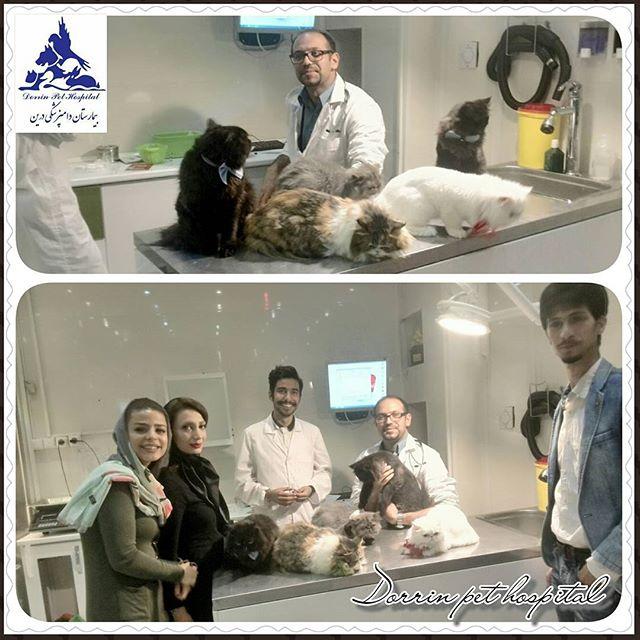 مراقبتهای ویژه و ICU بیمارستان دامپزشکی درین