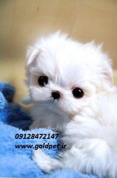 خرید و فروش سگ آپارتمانی ارزان