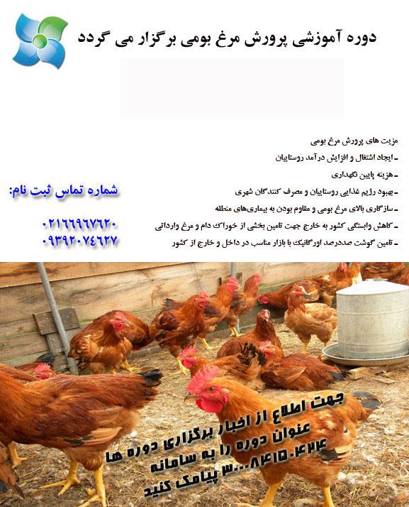 کارگاه پرورش مرغ بومی