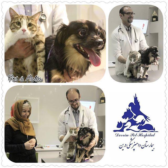 فیزیوتراپی و آبدرمانی حیوانات خانگی بیمارستان دامپزشکی درین