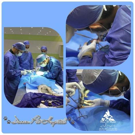 شیمی درمانی و بیماریهای خاص حیوانات خانگی بیمارستان دامپزشکی درین