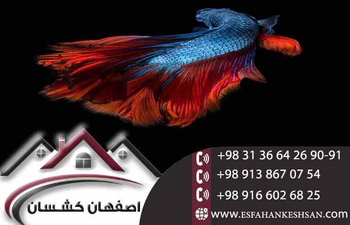 تایل سقفی ضد حریق با نصب سریع و آسان با نازلترین قیمت در اصفهان کشسان
