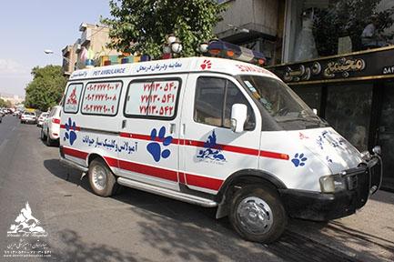 تغذیه و رژیم درمانی حیوانات خانگی بیمارستان دامپزشکی درین