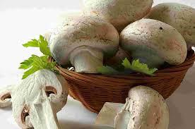 دوره آموزش پرورش قارچ خوراکی