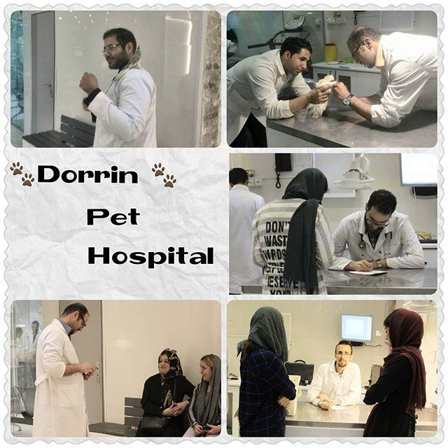 تشخیص ودرمان حیوانات خانگی بیمارستان دامپزشکی درین