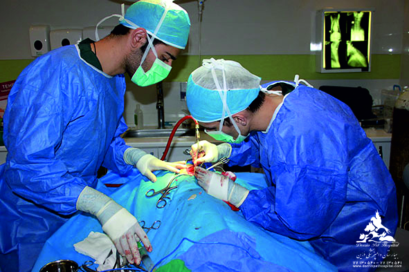 بخش قلب و داخلی حیوانات خانگی بیمارستان دامپزشکی درین
