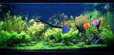آکواریوم های گیاهی ( پلنتاریوم )