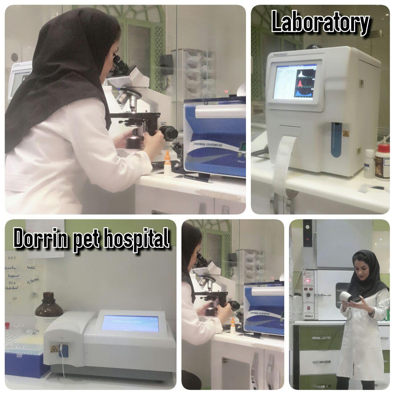 آزمایشگاه حیوانات خانگی بیمارستان دامپزشکی درین