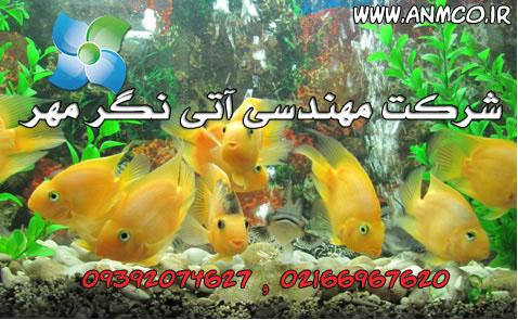 کارگاه تکثیر و پرورش ماهی زینتی