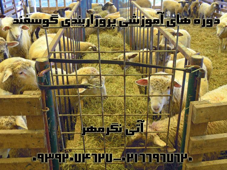 کارگاه آموزشی پرواربندی گوسفند