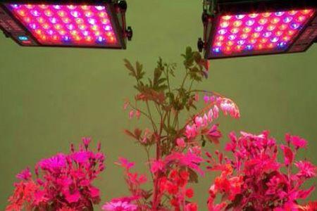 فروش و طراحی انواع چراغ های رشد گل و گیاه