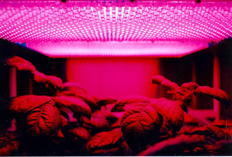 فروش انواع لامپ LED برای رشد گل و گیاه و فوتوسنتز